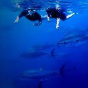 Nadar entre atunes